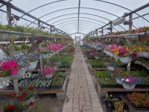 Photo courtesy of Good Ole' Plant Land