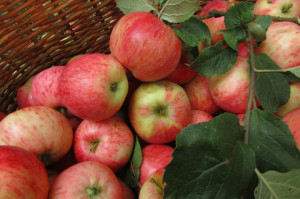 Apples in Basket DT_44619725