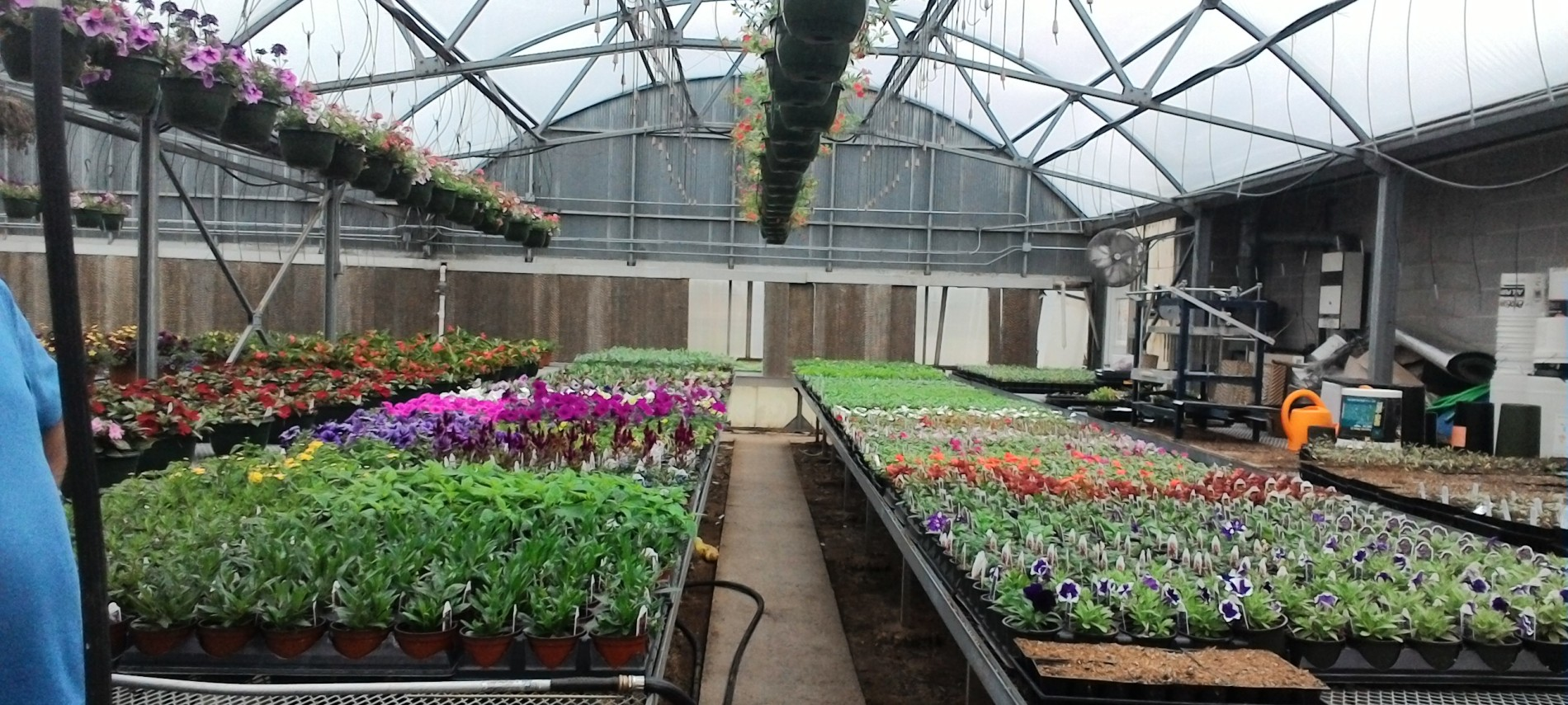 Large domed greenhouse with hanging plants along with row and rows of bulbed plants, hoses watering flowers.
