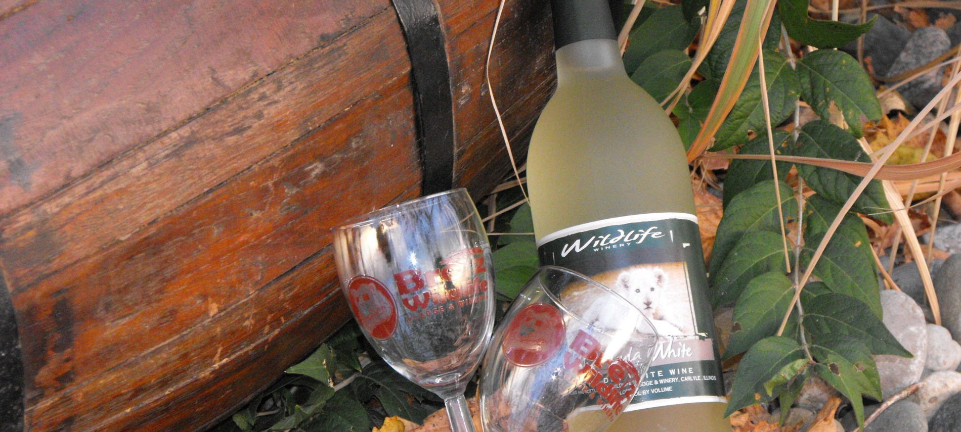 Bottle of white wine with glass sitting by a wooden trunk in leaves.