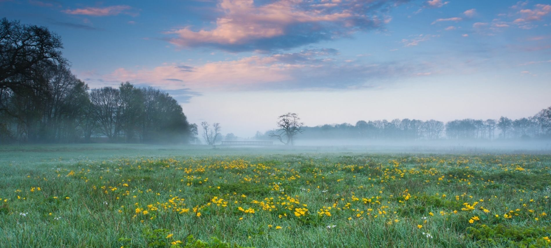 Meadow in the spring with yellow dandelions, green grass, blue sky and trees in the distance